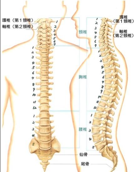胸椎12番